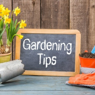 Check Out Our Monthly Gardening Tips